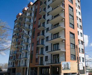 Stepina ljubičica - Novogradnja Voždovac, Beograd
