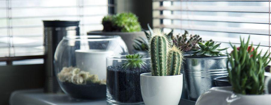 7 načina da unesete toplinu u vaš iznajmljeni stan